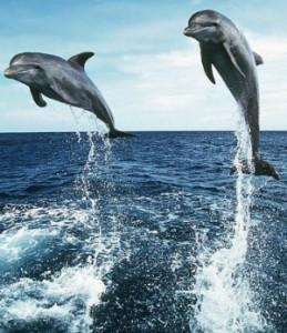 pensacola dolphin cruises